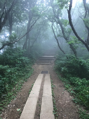 A rough path leading between trees to a flight of steps, which rise into the mist.